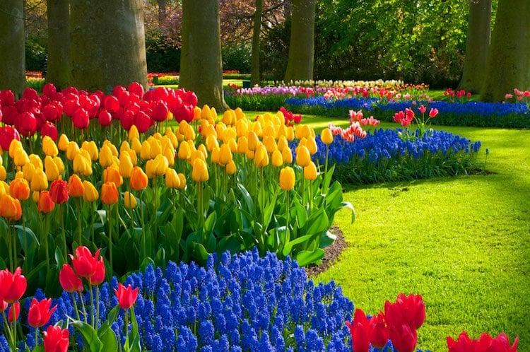Best Flower Garden Designs