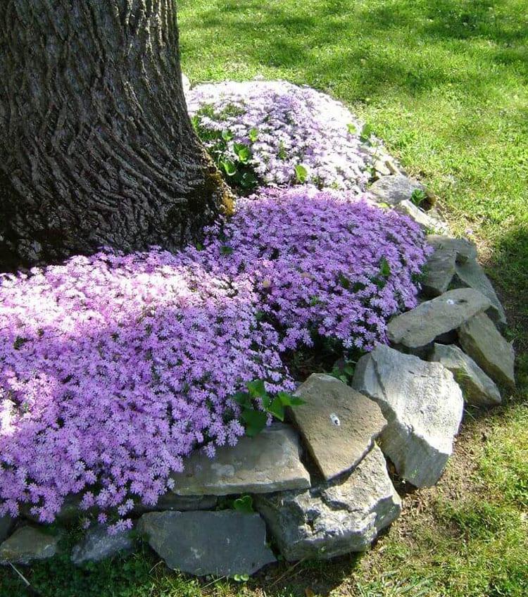 Easy Flower Bed Design Ideas