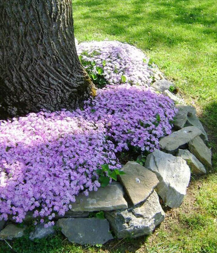 Stone Landscape Edging Ideas