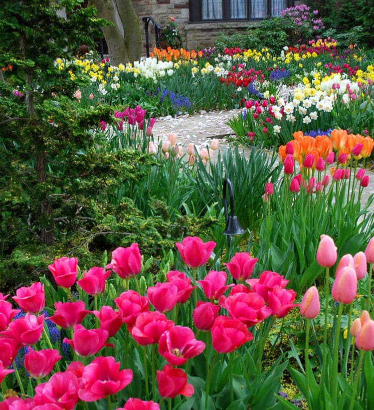 Beautiful Garden Landscaping with Tulips