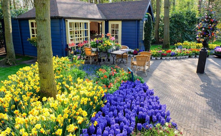 Classy Front Yard Garden with Bright Yellow and Blue Flowers