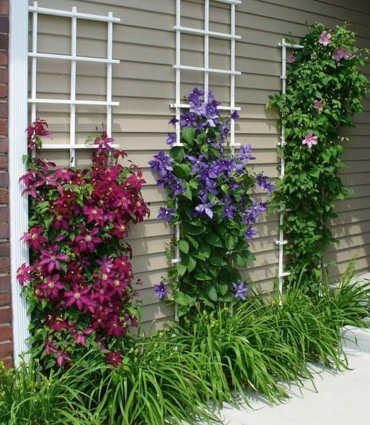 Flower Landscaping Ideas