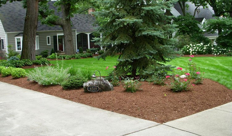 Low-Maintenance Simple Front Yard Landscape with Evergreen Plants