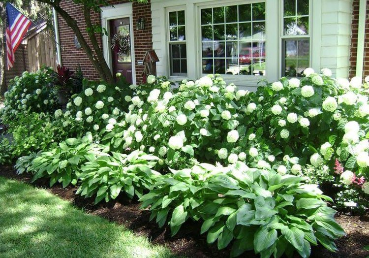 Lush Plants for a Relaxing Front Yard