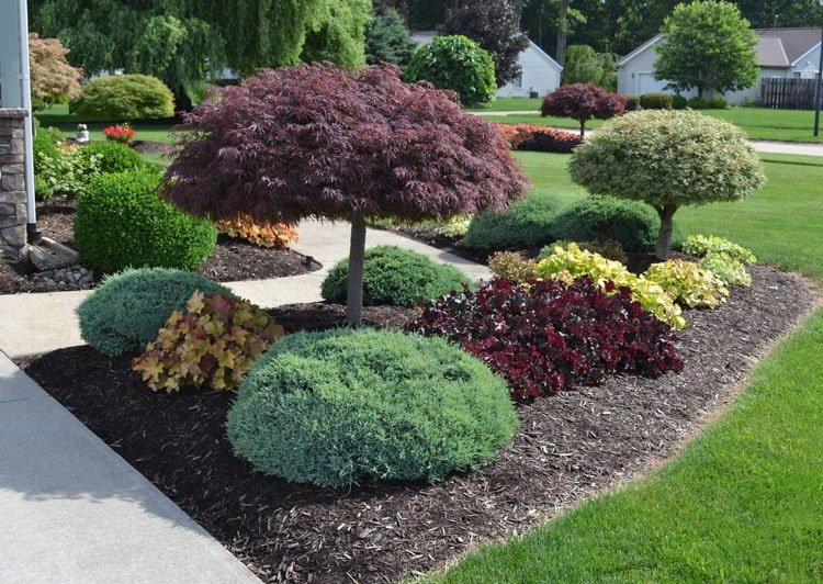 Playful Evergreen Shrubs For Simple Yard Landscaping Ideas