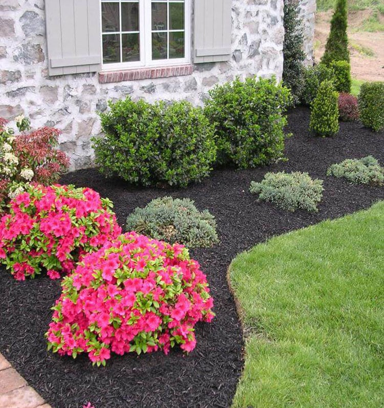 Simple Front Yard Landscape for Gardening Beginners