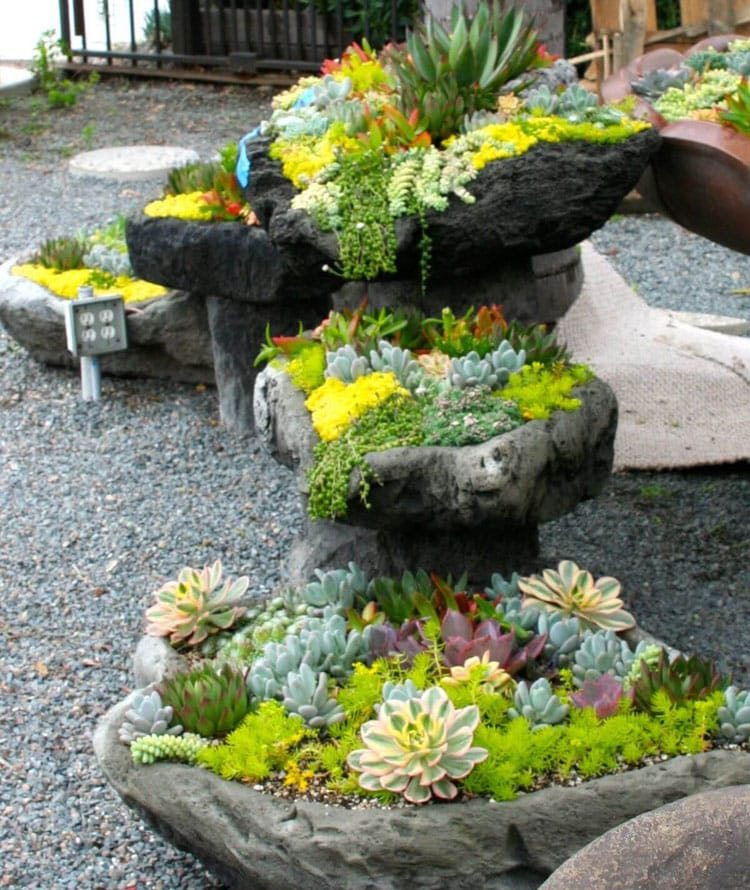 Stones and Succulents Go Great in Any Front Yard Landscaping Garden Ideas