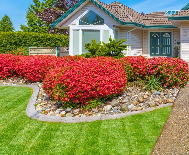 Use a Single Type of Plant for Consistency in Your Front Yard Design