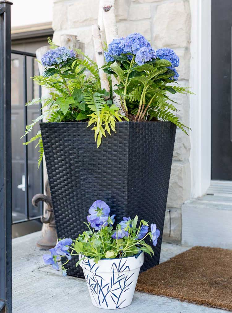 Blue and White Flowers in Front of Porch
