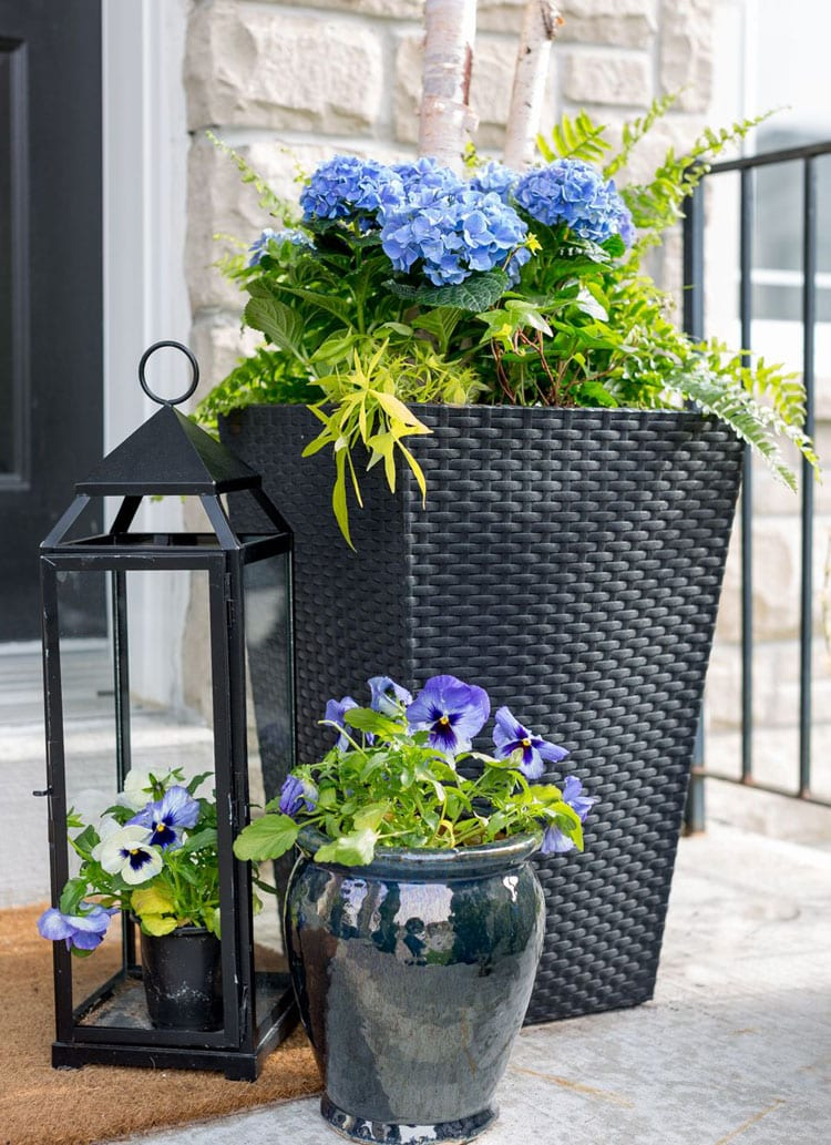 Classy Tall Black Planter with Blue Flowers