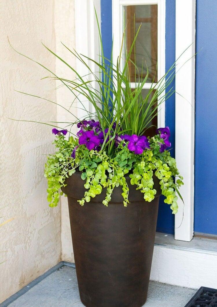 Front Door Planter Ideas