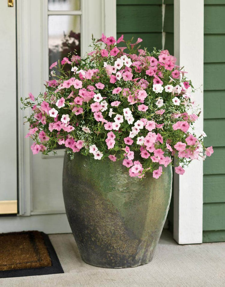 Front Porch Flower Pot Arrangements