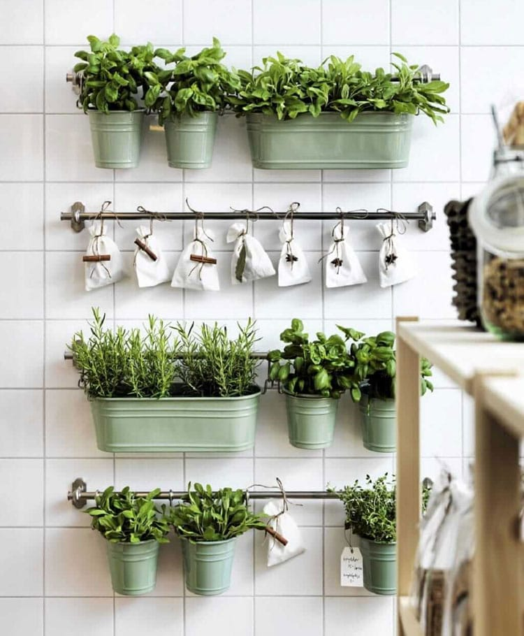 Kitchen Wall Art with Plants and Herbs