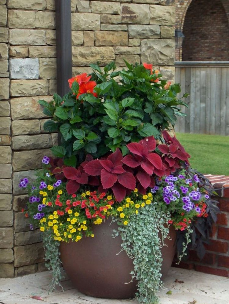 Large Flower Plant Pots by the Front of the House