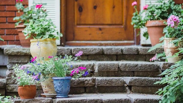 Pretty Front Door Potted Plants