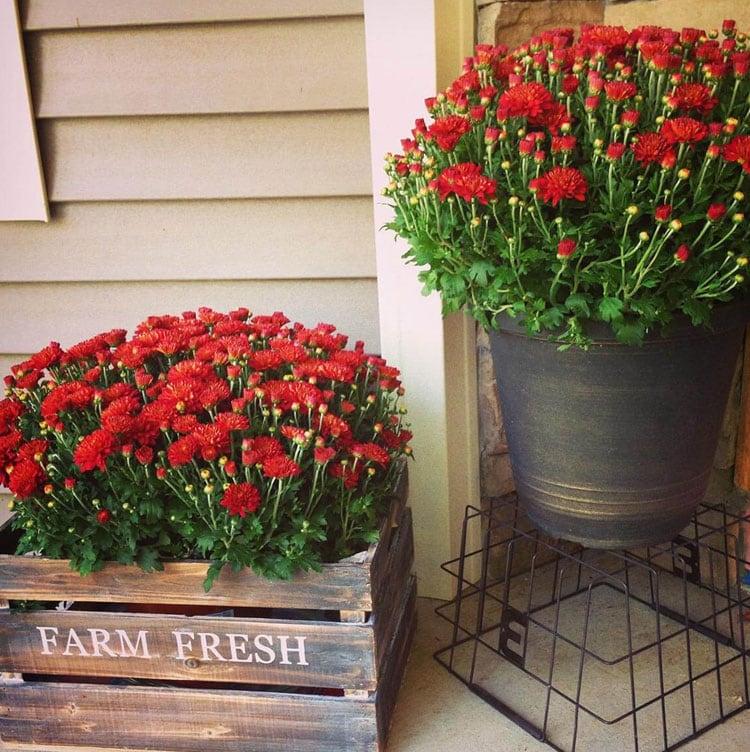 Rustic Flower Pot Ideas For The Front Door