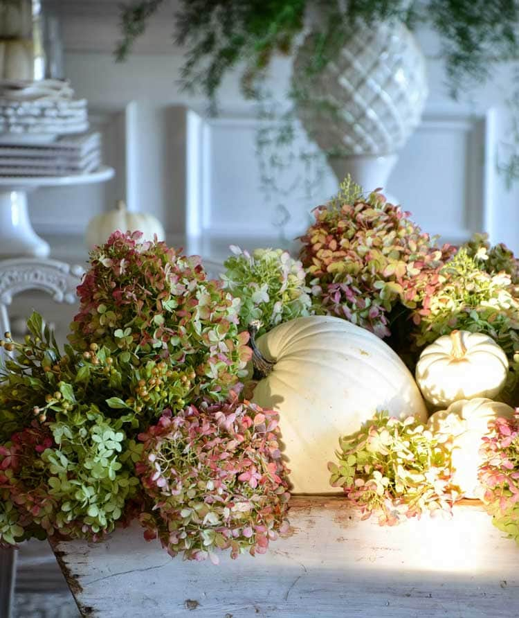 Simple Pumpkin and Hydrangea Display