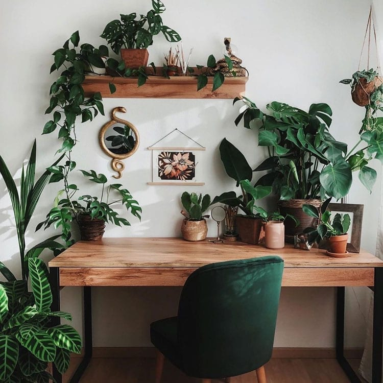 Workspace Plants
