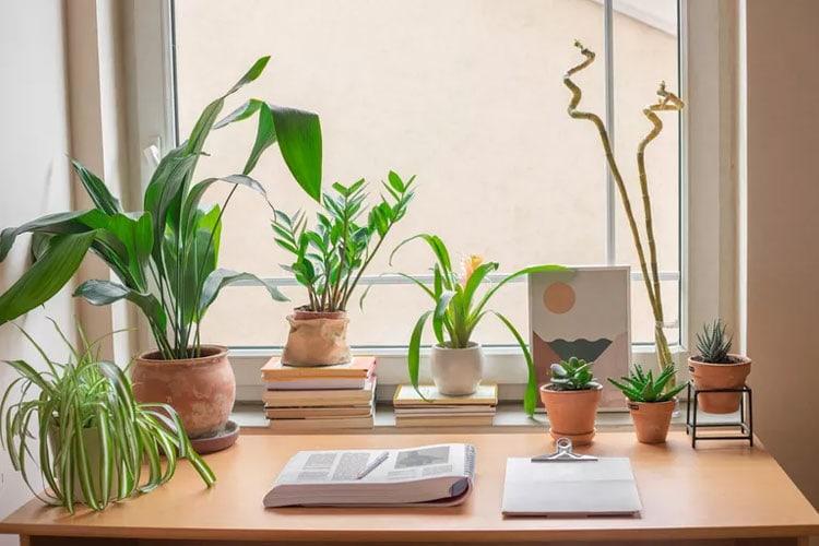 Dorm Room Plants